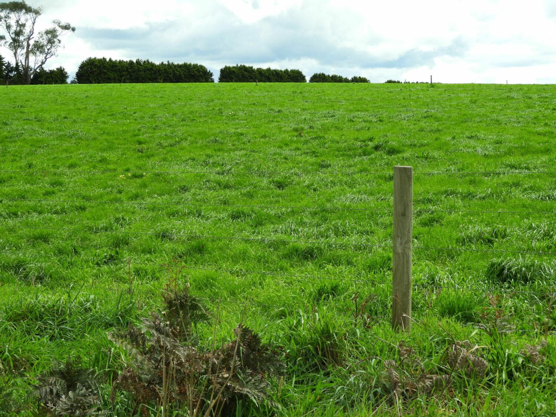 maree-deenan-dairy-farm-pasture-ignition